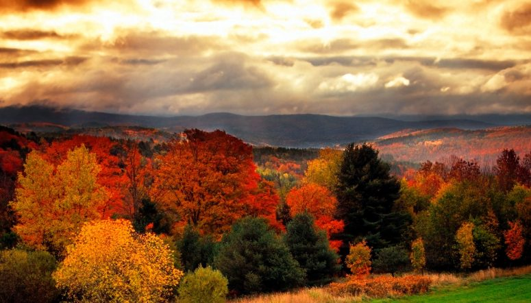 Become a Vermont Adjuster
